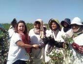 """مزارعات كفر الشيخ يستقبلن بالزغاريد وفد """"اليونيدو"""" لإنتاج قطن أفضل (صور)"""