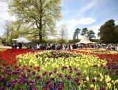 الورد على كل لون.. المهرجان السنوى للزهور فى أستراليا