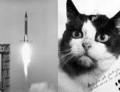 """فى مثل هذا اليوم .. """"فليسيت"""" تصبح أول قطة تطير فى الفضاء"""