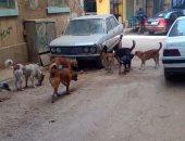 شكوى من انتشار الكلاب الضالة فى حى العباسية