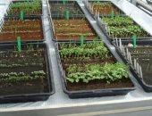 جهاز ذكى جديد يمكِّن مستخدمه من زراعة الخضراوات داخل مطبخه