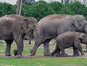 زيمبابوى: 55 فيلا نفقوا جوعا بسبب الجفاف