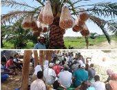 الزراعة: حملة قومية للقضاء على سوسة النخيل لزيادة الصادرات.. صور