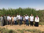 صور.. الزراعة تشكل لجانا لحل مشاكل مزارعى القصب بالصعيد
