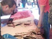 صور.. انخفاض أسعار الأسماك بالإسكندرية.. البلطى والبورى من 25 لـ40 جنيها