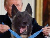 ترامب: الكلب كونان المشارك فى قتل البغدادى يزور البيت الأبيض قريبا