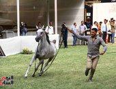 وزير الزراعة يترأس اجتماع مجلس أمناء محطة الزهراء للخيول العربية الأصيلة