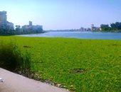 صور.. اضبط مخالفة .. ورد النيل يغطى مساحات كبيرة من نهر النيل بدمياط