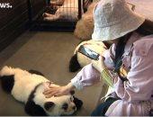 فيديو.. صاحب مقهى صيني يصبغ الكلاب بلون الباندا لجذب الزبائن