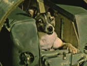 """9 أنواع حيوانات سافرت للفضاء الخارجى.. الكلبة """"لايكا"""" أشهرها"""