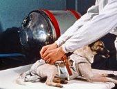 أول كائن أرضى يخرج للفضاء.. 10 معلومات عن الكلبة لايكا