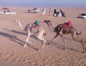 الاتحاد المصرى للهجن يستعد لتنظيم سباق جديد بالإسماعيلية