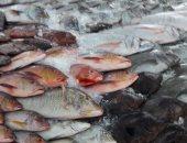 الثروة السمكية بسوريا: حصة السورى من الأسماك أقل من كيلوجرام فى السنة