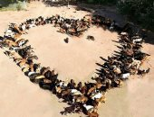 ساشا يعيد إيمانك بالإنسانية.. يدير ملجأ للكلاب فى صربيا يضم 750 كلبًا