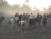 شاهد سباقات الخيول فى قرى الأقصر احتفالا بالمولد النبوى الشريف