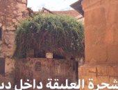 تعرف على الشجرة التى ناجى نبى الله موسى ربه عندها بسانت كاترين