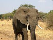 زيمبابوى تنفذ أكبر عملية نقل حيوانات عبر تاريخها