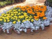 الورد جميل .. شوف الزهور واتعلم فى معرض الخريف (فيديو)