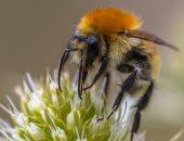 العالم يفقد ربع حشراته.. وعلماء: اقتراب نهاية دنيا الحشرات