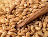 السعودية تطرح مناقصة لشراء نحو 420 ألف طن من الشعير