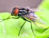 فيديو معلوماتى.. أمراض ينقلها الذباب وطرق الوقاية