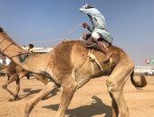 تأجيل انطلاق فعاليات مهرجان الهجن بشرم الشيخ ليوم الجمعة