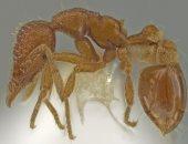 العثور على نوع جديد من النمل فى مكان لم تتوقعه أبدًا.. اعرف القصة