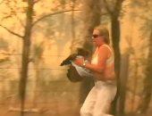 مليون دولار تبرعات لم تنقذه.. نفوق حيوان الكوالا متأثرا بإصابته بحريق أستراليا