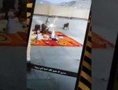 شاهد.. قرود تهاجم مدرسة فى السعودية وتسرق طعام المعلمات