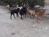 شكوى من انتشار الكلاب الضالة والقمامة بمنطقة السويسرى بمدينه نصر