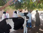 الزراعة: استمرار أعمال القوافل البيطرية للماشية بالقرى الأكثر احتياجًا