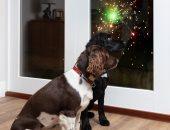 كيف تحافظ على هدوء حيوانك الأليف أثناء إطلاق الألعاب النارية؟ فيديو