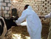 بدء الحملة القومية لتحصين 140 ألف رأس ماشية ضد أنواع الحمى بالوادي الجديد