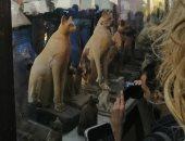 """مدير منطقة آثار سقارة يكشف تفاصيل اكتشاف تماثيل """"هاميس"""" وعدد كبير من الحيوانات"""
