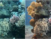 علماء يطورون تقنية تظهر الألوان الحقيقية للصور الملتقطة تحت الماء