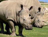 نفوق أكبر أنثى وحيد قرن فى العالم بتنزانيا عن 57 عاما