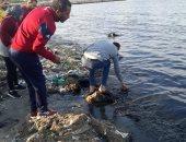 صور.. تلوث بحر الطابية شرق الإسكندرية بمخلفات المصانع وسحب عينات لتحليلها