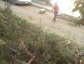 شكوى من قص الأشجار وتركها أسفل شباك مواطن بالخلفاوى