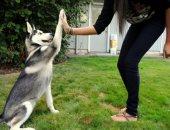 اعرف الكلب المفضل لكل برج..الحمل يحب كلاب الحراسة والجوزاء يفضل بيشون فريز
