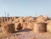 محافظ كفر الشيخ: تحويل قش الأرز إلى أعلاف وتسميد للتربة وتوفير فرص عمل للشباب