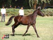 أول تقرير عن محطة الزهراء للخيول.. 11 ملاحظة تستوجب التدخل العاجل