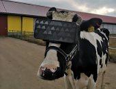 روس يستخدمون نظارات الواقع الافتراضى لتحسين إنتاج الأبقار من اللبن