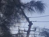 """عمود الكهرباء آيل للسقوط وبدون عوازل وأسلاك غير مؤمنة"""" شكوى قارئ بالدقهلية"""