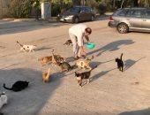 نجل مدحت صالح يبرز الجانب الإنساني لوالده مع القطط.. فيديو
