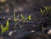 تحذيرات:تغير المناخ يؤثر على المحاصيل ويزيد معدلات الجوع وسوء التغذية
