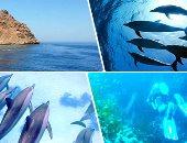 """صور.. هنا """"محمية الجزر الشمالية"""" درة البحر الأحمر.. يقع بنطاقها أكثر من 16 جزيرة.. وتضم أشهر موقعى غوص """"العرق والفانوس"""" وبيوت للدلافين.. ومدير المحمية: وضعنا خطة لحمايتها ولن نسمح بإزعاج الكائنات البحرية"""