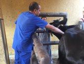 صور .. الزراعة: تحصين أكثر من مليون رأس ماشية ضد مرض الحمى القلاعية
