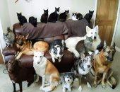 عيلتها التانية.. بريطانية تلتقط صورة لـ17 كلبا وقطا تستضيفهم بمنزلها