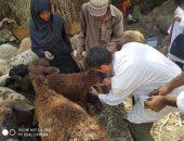 بيطري القليوبية: تحصين 80 ألف رأس ماشية بالحملة القومية للتحصين ضد الحمي القلاعية
