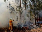 دراسة: أقل من نصف غابات العالم لا تتأثر بالنشاط البشرى